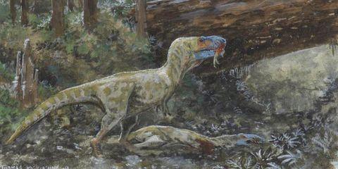 Adaptation, Dinosaur, Art, Artwork, Painting, Visual arts, Bird, Illustration, Beak, Drawing,