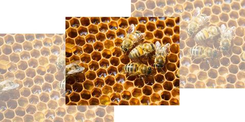 DIY Backyard Beekeeping: A Guide for Beginners