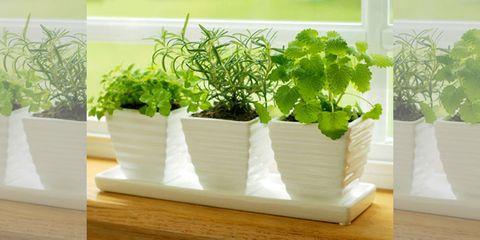 Plant, Leaf, Flowerpot, Interior design, Herb, Houseplant, Hardwood, Annual plant, Wood stain, Plywood,