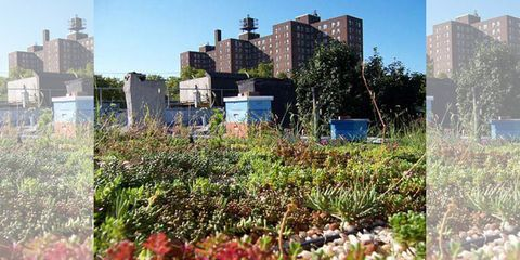 Vegetation, Plant, Property, Neighbourhood, Plant community, Real estate, Land lot, Urban area, Shrub, Residential area,