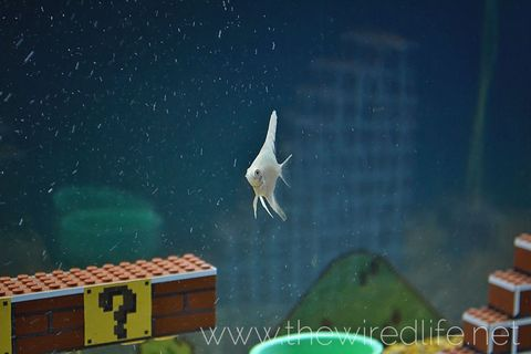 Bird, Wing, Space, Star, Animation, Astronomical object, Fictional character, Flight, Beak, Video game software,