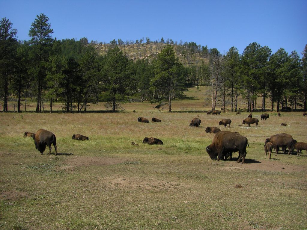 "&lt;strong&gt;Perfect for:&lt;/strong&gt; Those dreaming of the Wild West.  &lt;strong&gt;Main attractions:&lt;/strong&gt; Every September, thousands of buffalo that still run free in &lt;a target=""_blank"" href=""http://gfp.sd.gov/state-parks/directory/custer/""&gt;Custer State Park&lt;/a&gt; are rounded up in a glorious display of old cowboy life. Afterwards, you can pick up a few fur pelts and dig into some home-cooked BBQ in town.  <!--EndFragment-->"