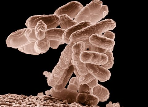 Organism, Ingredient, Fungus, Coral,