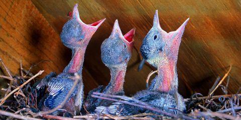 Vertebrate, Pink, Beak, Adaptation, Bird, Galliformes, Terrestrial animal, Creative arts, Phasianidae, Sculpture,