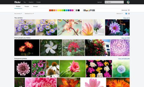 Petal, Flower, Purple, Pink, Colorfulness, Violet, Lavender, Magenta, Flowering plant, Design,