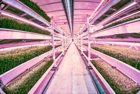 Green, Purple, Infrastructure, Lavender, Violet, Magenta, Pink, Walkway, Ceiling, Colorfulness,