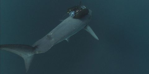 Fluid, Underwater, Liquid, Marine biology, Fin, Marine mammal, Fish, Submersible, Science, Marine invertebrates,