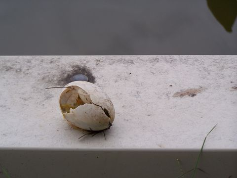 Beige, Natural material, Still life photography, Coconut,