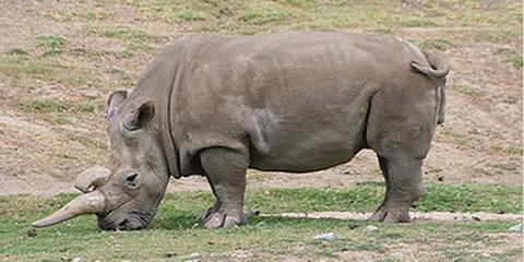 11 extinct animals lost species gone forever