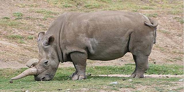 11 Extinct Animals & Lost Species Gone Forever