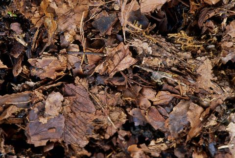 Why You Should Mulch Your Leaves and Leave 'Em on Your Lawn This Fall