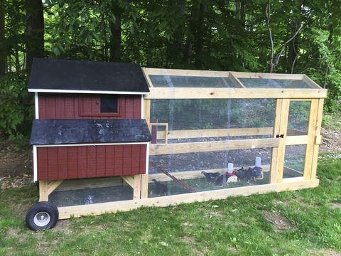 Wood, Land lot, Rural area, Cage, Pet supply, Garden buildings, Shed, Chicken coop, Woodland, Tread,