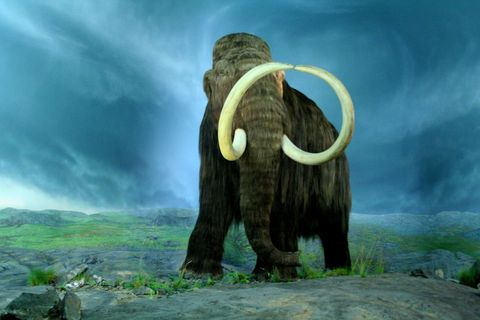 Natural landscape, Mammoth, Animation, Terrestrial animal, Natural material, Painting, Illustration, Tusk, Working animal, Horn,