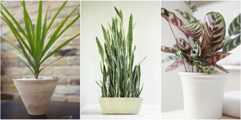 10 robust houseplants that can survive in even the darkest for Cool low maintenance plants
