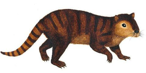 Brown, Organism, Terrestrial animal, Line, Adaptation, Jaw, Snout, Rodent, Liver, Tail,