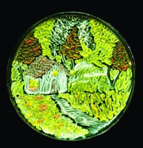 petri-dish-art.jpg