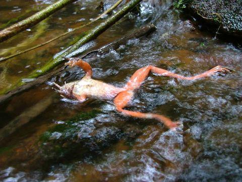 Body of water, Fluid, Liquid, Water resources, Watercourse, Pond, Stream, Algae, Spring, Fish,