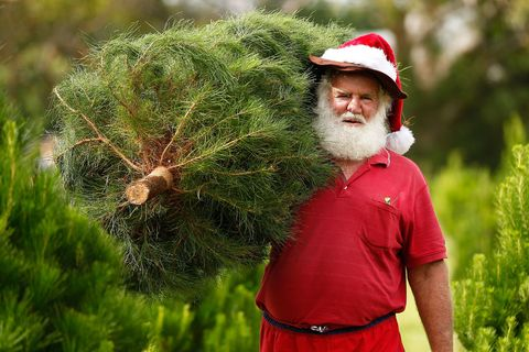 Facial hair, People in nature, Headgear, Costume accessory, Beard, Terrestrial plant, Moustache, Holiday, Evergreen, Christmas,