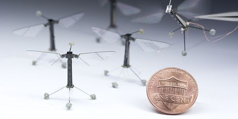 robotic-bees-fly.jpg
