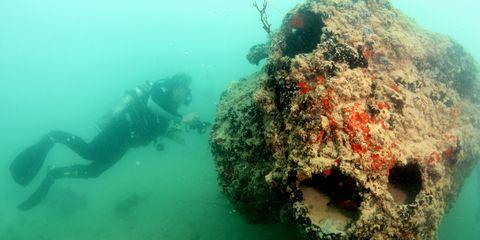Fluid, Organism, Underwater, Green, Underwater diving, Personal protective equipment, Diving equipment, Divemaster, Scuba diving, Coral,