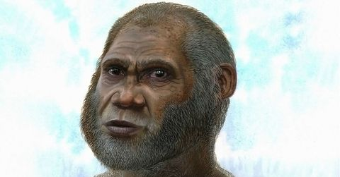 An Ancient Human Relative May Have Survived Until Surprisingly Recently
