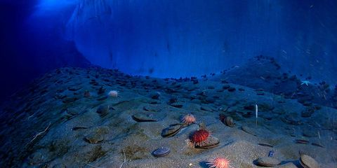 Underwater, Organism, Natural environment, Azure, Electric blue, Coral, Reef, Marine biology, Sea urchin, Cnidaria,