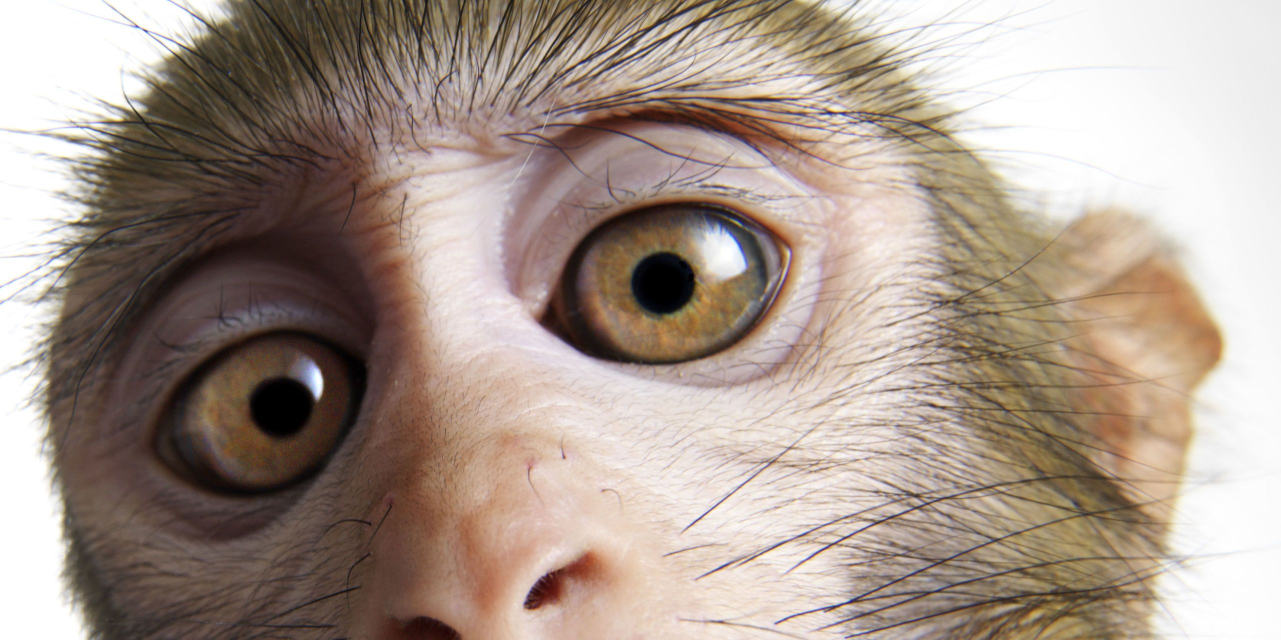 Lab-Grown Cells Restore Sight to Blind Monkeys