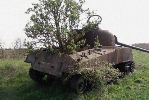 Motor vehicle, Mode of transport, Transport, Combat vehicle, Plant community, Military vehicle, Tank, Auto part, Plain, Grassland,