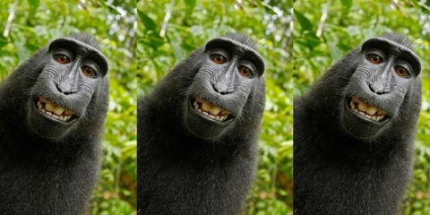 Vegetation, Nature, Organism, Natural environment, Skin, Vertebrate, Primate, Terrestrial animal, Green, Photograph,