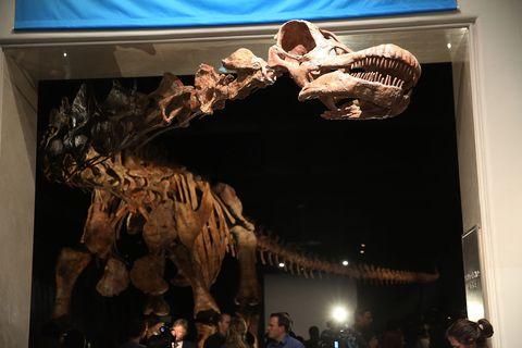 Extinction, Bone, Jaw, Fossil, Skeleton, Dinosaur, Museum, Tourist attraction, Skull, Rib,