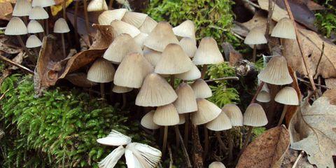Nature, Vegetation, Wood, Natural landscape, Organism, Leaf, Ingredient, Mushroom, Landscape, Fungus,