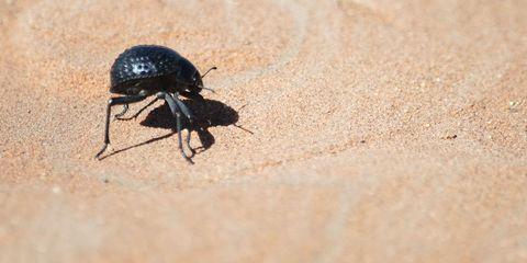 namib-desert-beetle-shell.jpg