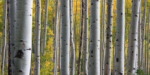 Vegetation, Natural environment, Green, Leaf, Forest, Terrestrial plant, Botany, Biome, Trunk, Plant stem,