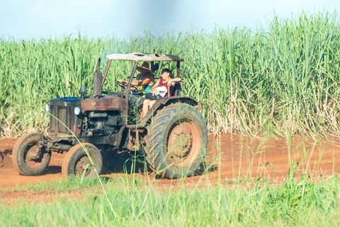 Obsolete Russian agricultural tractor in a cane field in Cuba.