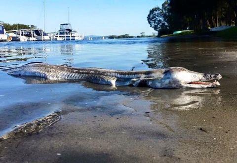 Nature, Alligator, Crocodilia, Crocodile, Water, Water resources, American crocodile, Bank, Watercourse, Nile crocodile,