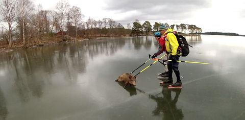 Water, High-visibility clothing, Workwear, Carnivore, Dog, Bank, Reflection, Personal protective equipment, Backpack, Leash,