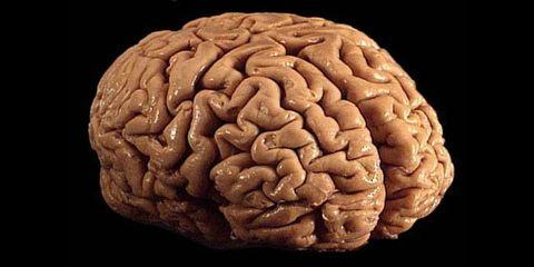 Brown, Forehead, Brain, Organ, Temple, Carving, Brain, Close-up, Creative arts, Symmetry,