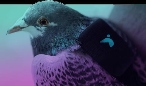 Blue, Green, Bird, Beak, Vertebrate, Purple, Violet, Feather, Teal, Turquoise,