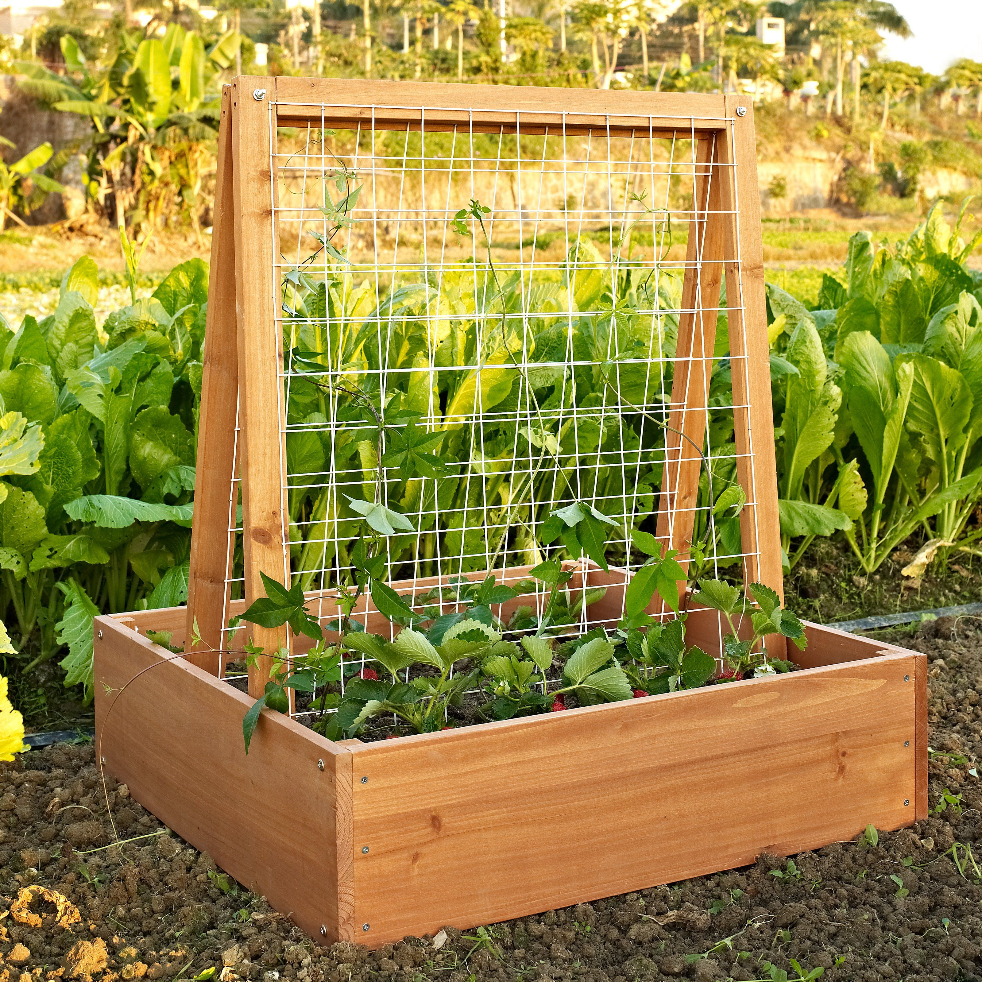 10 Raised Garden Beds That Fit Any Backyard Space
