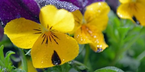 yellow-flowers.jpg