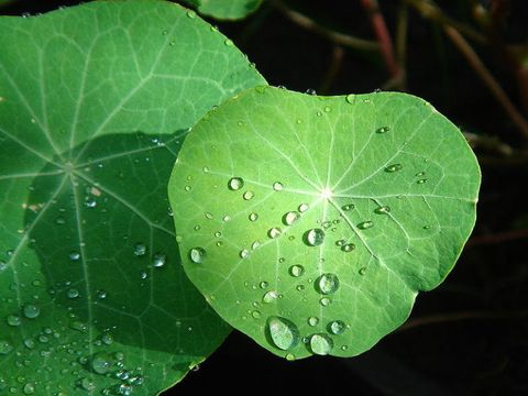 Green, Leaf, Moisture, Liquid, Drop, Annual plant, Dew, Herbaceous plant, Perennial plant, Parsley family,