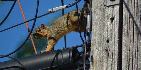 Blue, Daytime, Squirrel, Iron, Metal, Fox squirrel, Rodent, Grey squirrel, ground squirrels, Mesh,