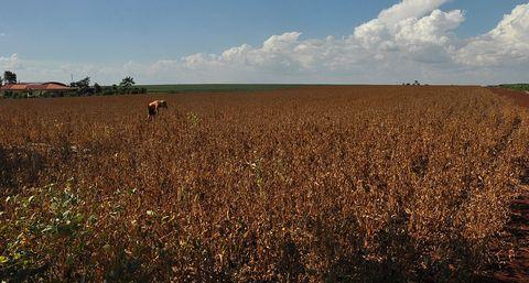 Natural environment, Agriculture, Farm, Field, Plain, Land lot, Ecoregion, Grassland, Savanna, Rural area,