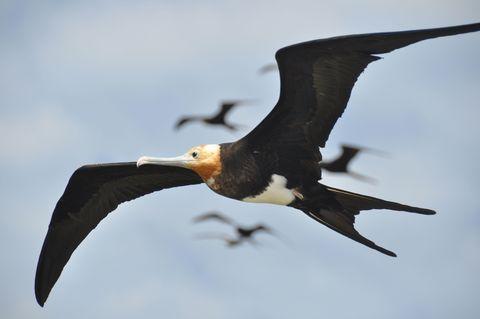 Organism, Daytime, Bird, Vertebrate, Beak, Wing, Ecoregion, Wildlife, Feather, Neck,
