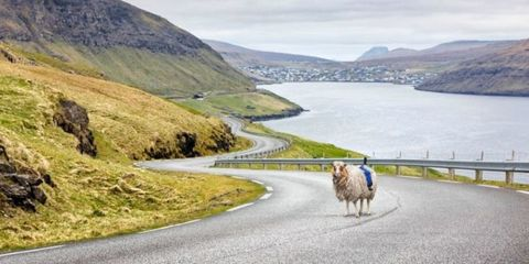 Remote Islands Create Street View by Strapping Cameras to Sheep