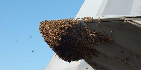 f-22-bees.jpg