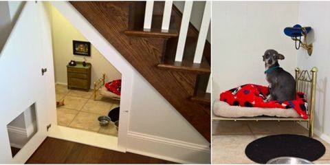 This Dog Has His Own Harry Potter Room Under the Stairs