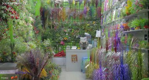 Purple, Flower, Lavender, Petal, Garden, Violet, Shrub, Majorelle blue, Floristry, Backyard,