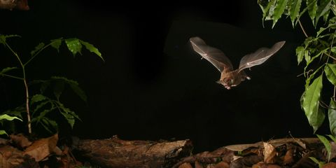 Nature, Organism, Bird, Beak, Wing, Terrestrial plant, Wildlife, Feather, Flight, Jungle,