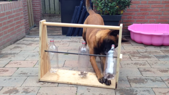 DIY a Dog Toy Out of Empty Soda Bottles
